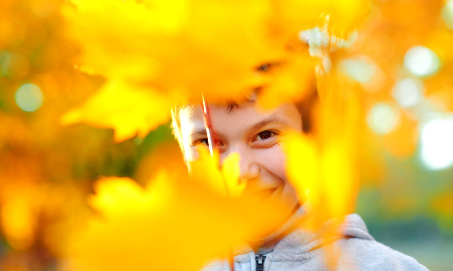 Boy looking through some yellow leaves.